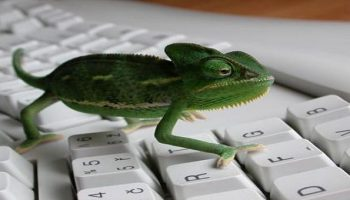 Database of Lizard Stresser Tool clients leaked, more than 14241 users leaked