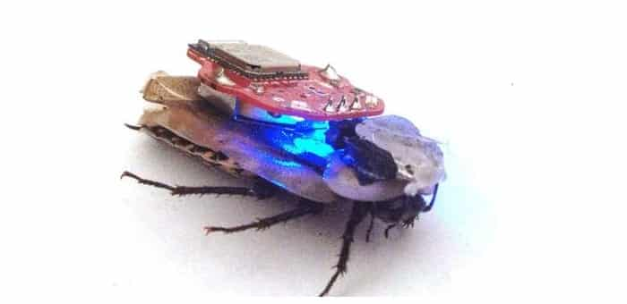Researchers have created Cyborg Cockroaches by hijacking the cockroach brain and nervous systems using advanced computer chips