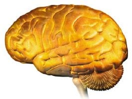 Future Nanotechnology: Gold Nano-particles can be used as remote control of the brain