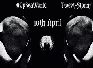Anonymous takes cudgels with Seaworld on behalf of nature lovers, launch #OpSeaWorld