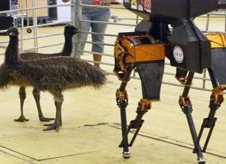 World's Fastest Bi-Pedal Robot 'ATRIAS' Enjoys Stroll On Grass