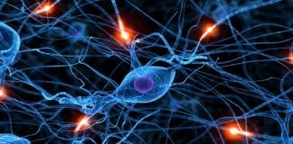 Sweden scientists build 'Artificial Neurons' that mimic function of human nerve cells