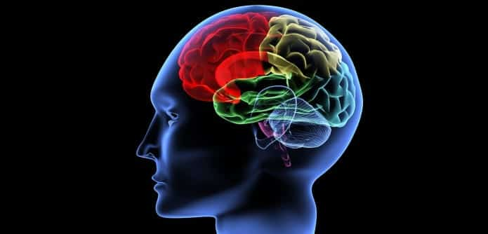 how can the study of brain Bioinformatics is a field of study that includes the creation and advancement of databases, and computational and statistical techniques, that can be used in studies of the human brain, particularly in the areas of gene and protein expression.