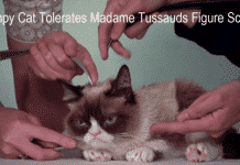 Internet sensation Grumpy Cat joins Steve Jobs, Beyonce, Obama, to get a wax statue at Madame Tussauds museum