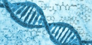 Single strand of DNA used to create world's smallest diode