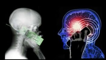 29-year old study finds there is no link between mobiles and brain cancer