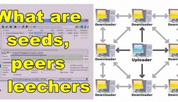 What are seeds, peers and leechers in Torrents' language?