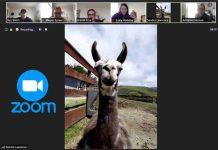 llama in zoom