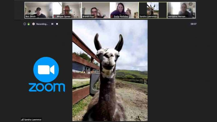 Add Fun To Your Boring Zoom Meetings By Inviting A Llama Or Goat