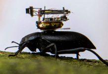 beetle camera